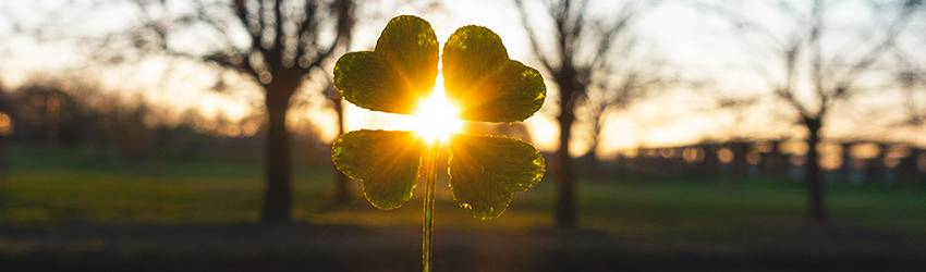 A person holds a lucky four leaf clover in front of a sunset.