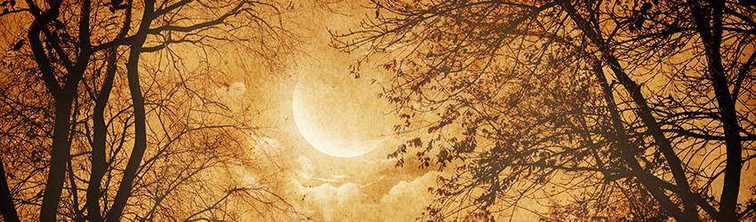 A New Moon in an orange sky behind some trees.