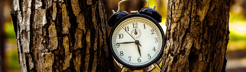 An alarm clock in a tree - representing a clock in your dreams.