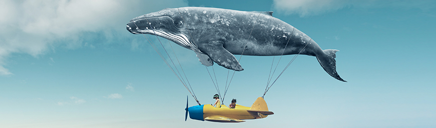 A whale blimp flies in the sky above the clouds with people in a blue basket below. This is a dream sequence involving animals.