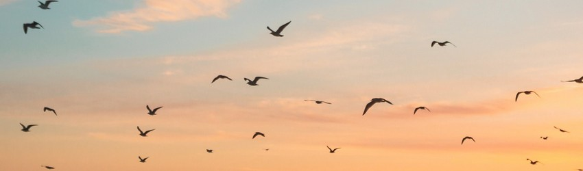 Birds flying in the sky during a sunset in a dream.