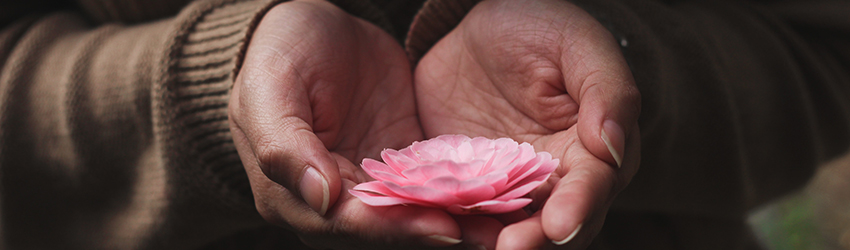 A woman holds a pink flower out in her palms.