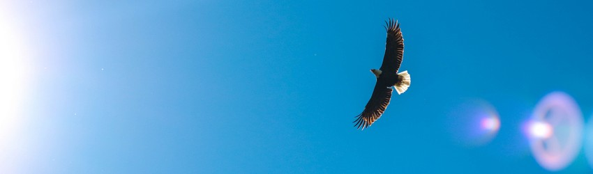 An eagle flying in the sky in a dream.